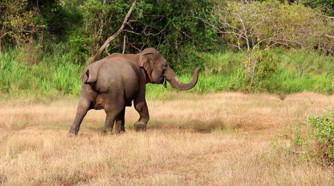 Wild-Elephant-653x365