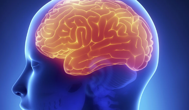 10 things to know about the human brain | TheCable Lifestyle