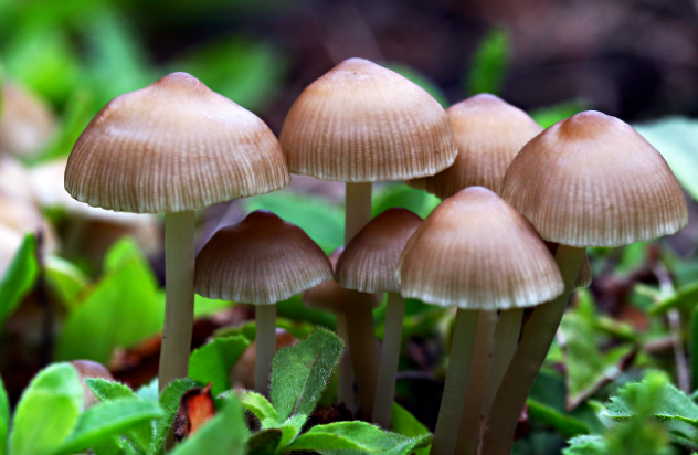 Health benefits of mushrooms  |TheCable Lifestyle