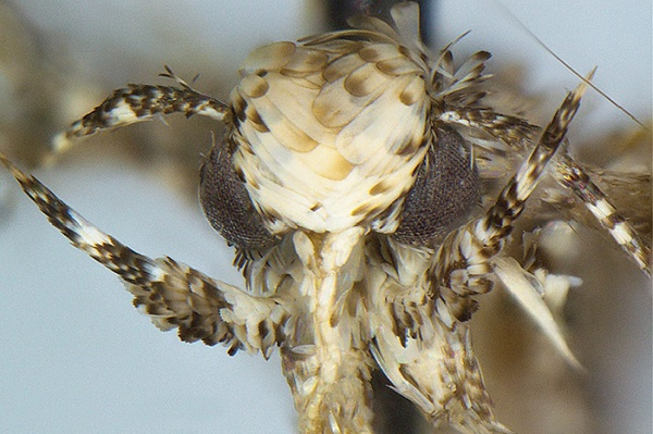 Moth named after Donald Trump | TheCable Lifestyle