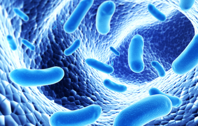 Probiotics reduce risk of gestational diabetes | TheCable.ng