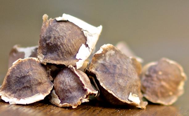 Health benefits of Moringa seeds | TheCable.ng