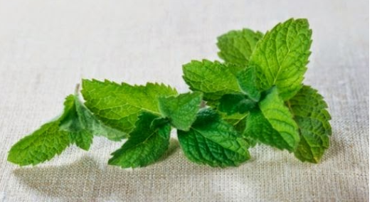 Health benefits of scent leaves | TheCable.ng