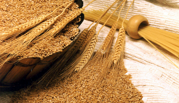 Health benefits of wheat | TheCable.ng