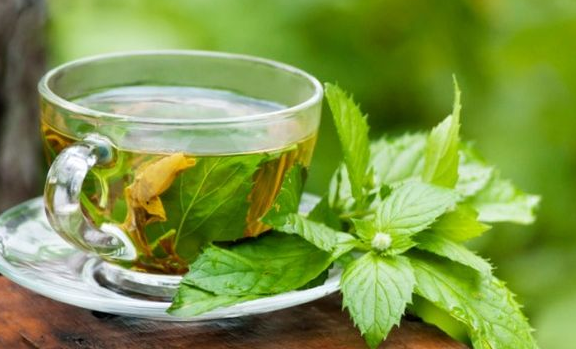 Green tea improves memory, combats obesity | TheCable.ng