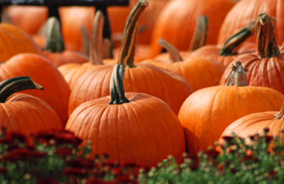Health benefits of Pumpkin | TheCable.ng