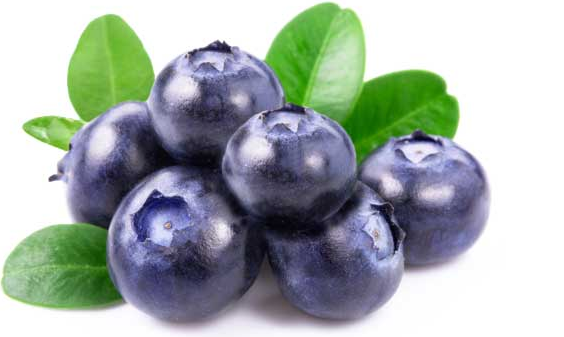 Health benefits of blueberry | TheCable.ng