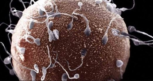 Two months of stress 'can damage' a man's fertility